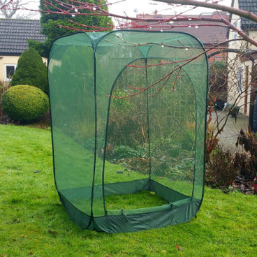 Fruit Cages - Pop Up Fruit Cages – Pop-Up Net Fruit Cage – 1m x 1m x 1.85m High