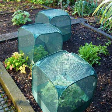 Fruit Cages - Pop Up Cages - Pop-Up Mini Net Fruit Cage – 50 x 50 x 50cm (pack of 3)
