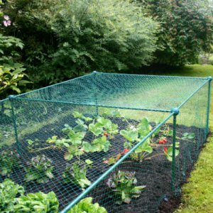 Summer Products - Build-a-Cage Fruit Cage with Bird Net (0.625m high)