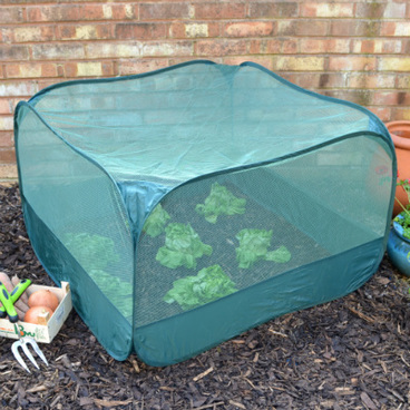 Fruit Cages - Pop Up Fruit Cages - Pop-Up Net Fruit Cage – 1m x 1m x 0.65m High