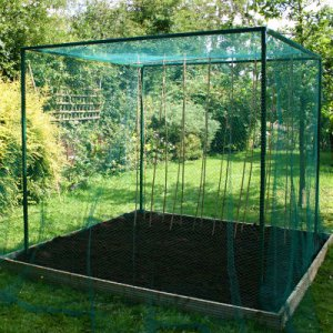 Fruit Cages - Walk In Fruit Cages – Walk In Fruit Cages (No Door) - Walk-In Fruit Cage – 2m x 2m x 2m high