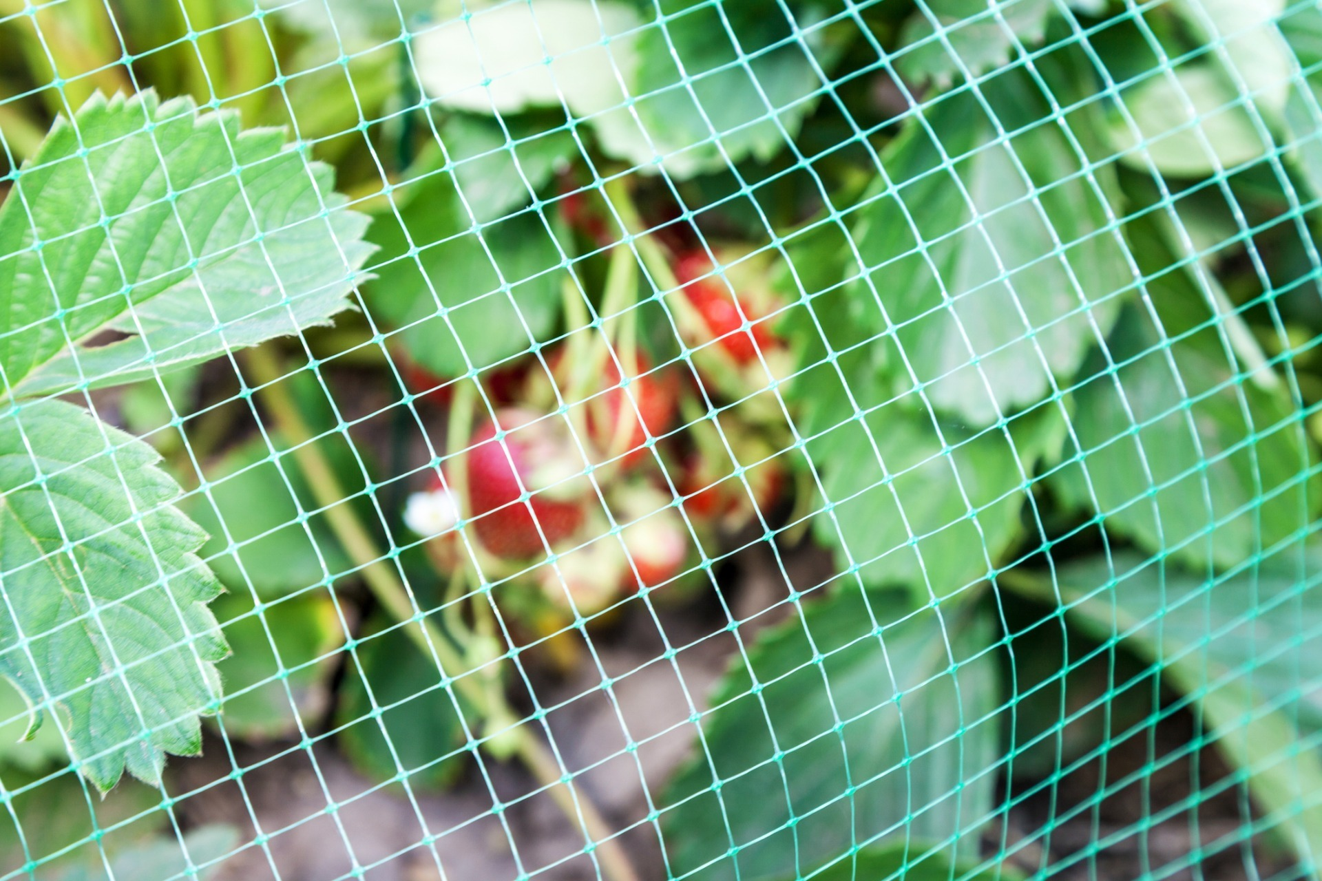 Netting & Fleece - Bird Netting - Banner Image
