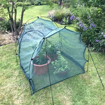 Cloches & Tunnels – Grow Tunnels – Pro-Gro Net Tunnel Cloche – 1m long x 1m wide x 1m high