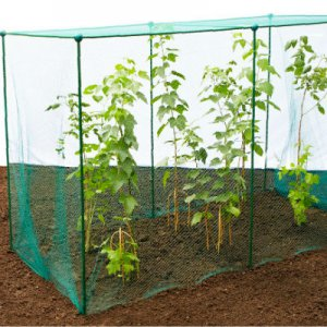 Fruit Cages - Build-a-Cages - Butterfly Net Cages - Build-a-Cage Fruit Cage with Butterfly Net (1.875m high)