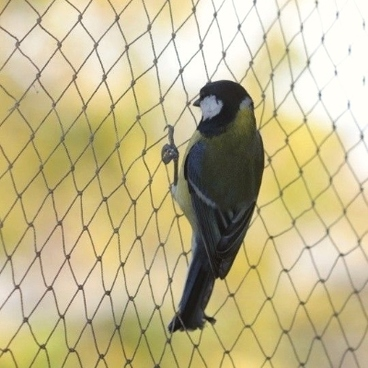 Fruit Cages - Walk In Fruit Cages – Walk In Fruit Cage Components - Bird Netting - 4m Wide (Various Sizes)
