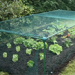 Fruit Cages - Build-a-Cages - Butterfly Net Cages - Build-a-Cage Fruit Cage with Butterfly Net (0.625m high)
