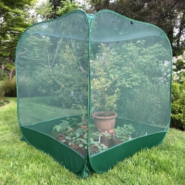 Fruit Cages - Pop Up Cages - Pop n Grow Fruit Cage & Brassica Guard 1m x 1.35m