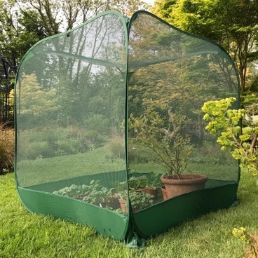 Fruit Cages - Pop Up Cages - Pop n Grow Fruit Cage & Brassica Guard 1.25m x 1.35m