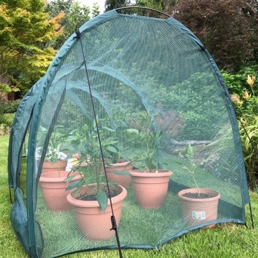 Cloches & Tunnels – Pro-Gro Net Tunnel Cloche – 5m long x 1m wide x 1m high