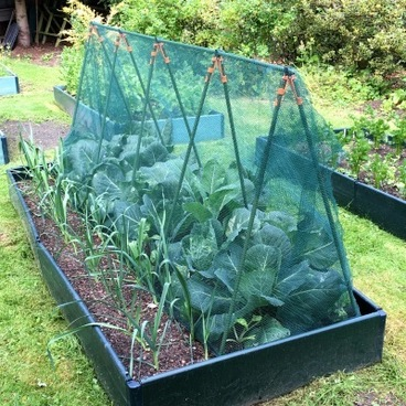Cloches & Tunnels – Super Cloche Strawberry Protection Cage with Bird Netting - 2.4m x 0.75m x 1m high